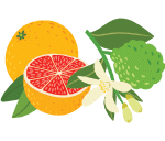 Grapefruit & Bergamot